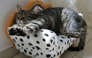 Design Katzenmöbel online bestellen