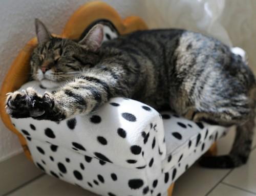 Das macht Katzen glücklich: Katzenmöbel aus dem Herzen des Schwarzwalds