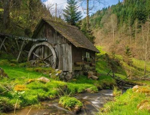 Die schönsten Routen zum Fastenwandern im Schwarzwald