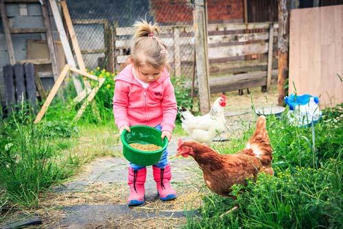 Urlaub Bauernhof Schwarzwald Tiere füttern
