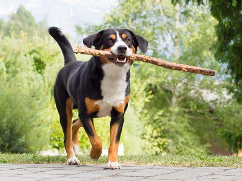 Urlaub Schwarzwald Hund